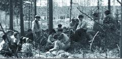 Skogsgardister 1